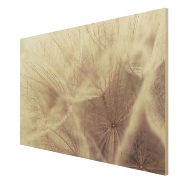 Quadro in legno - Detailed dandelions macro shot with vintage blur effect - Orizzontale 3:2
