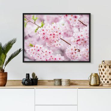 Poster con cornice - Blossoms giapponesi ciliegia