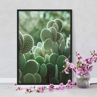 Poster con cornice - Cactus