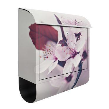 Cassetta postale - Ramo di fiori di ciliegio in rosa antico