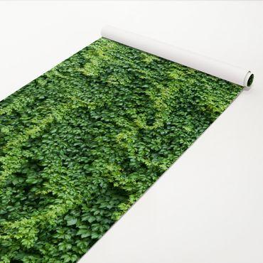 Pellicola adesiva - Ivy