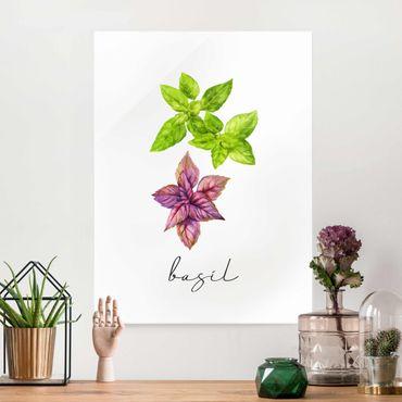 Quadro in vetro - Illustrazione di erbe aromatiche basilico
