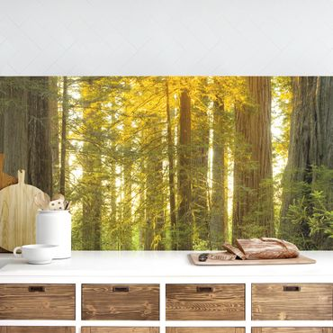 Rivestimento cucina - Redwood National Park