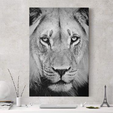 Stampa su tela Old lion - Verticale 2:3