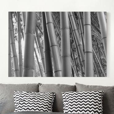 Stampa su tela - Bamboo - Orizzontale 3:2