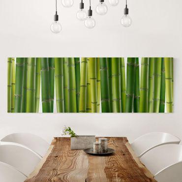 Stampa su tela - Bamboo Plants - Panoramico