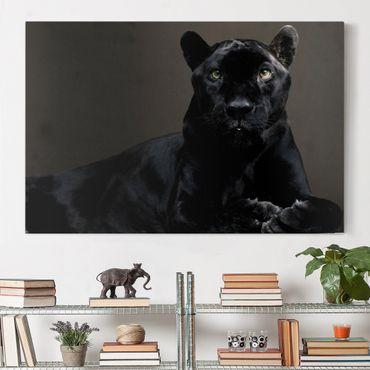 Stampa su tela - Black Puma - Orizzontale 3:2