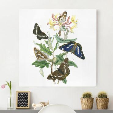 Stampa su tela - British Butterflies IV - Quadrato 1:1