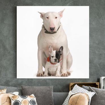 Stampa su tela - Bull Terrier And Friend - Quadrato 1:1