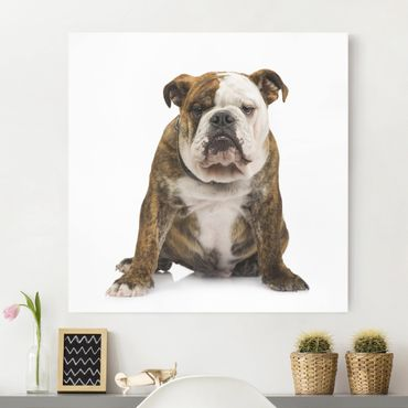 Stampa su tela - Bulldog - Quadrato 1:1