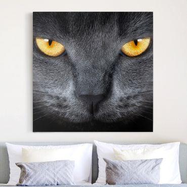 Stampa su tela - Cats Gauze - Quadrato 1:1