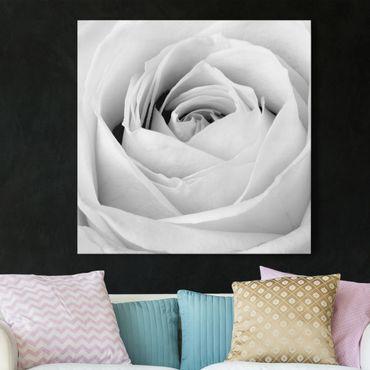 Stampa su tela - Close Up Rose - Quadrato 1:1