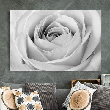 Stampa su tela - Close Up Rose - Orizzontale 3:2