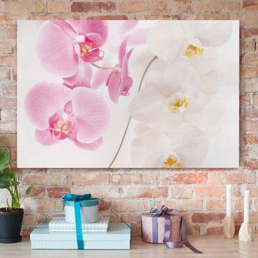 Stampa su tela - Delicate Orchids - Orizzontale 3:2
