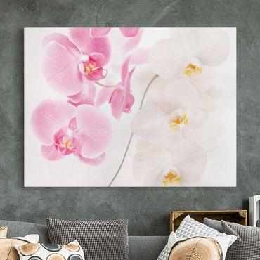 Stampa su tela - Delicate Orchids - Orizzontale 4:3