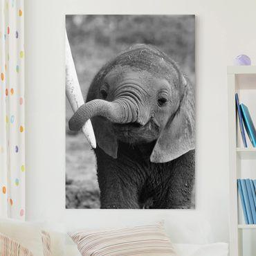 Stampa su tela - Elefantino - Verticale 2:3