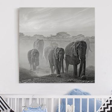 Stampa su tela - Branco di Elefanti - Quadrato 1:1