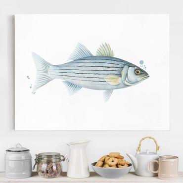 Stampa su tela - Color Catch - White Perch - Orizzontale 4:3