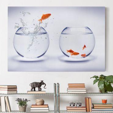 Stampa su tela - Flying Goldfish - Orizzontale 3:2