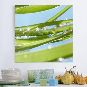 Stampa su tela - Fresh Green - Quadrato 1:1