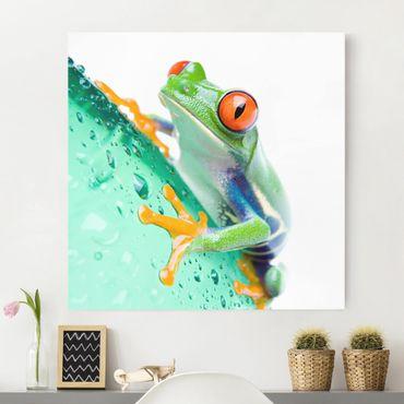 Stampa su tela - Frog - Quadrato 1:1