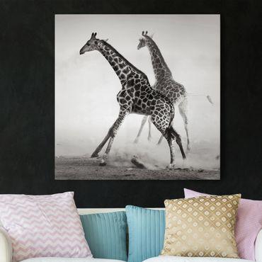 Stampa su tela - Giraffe Hunting - Quadrato 1:1