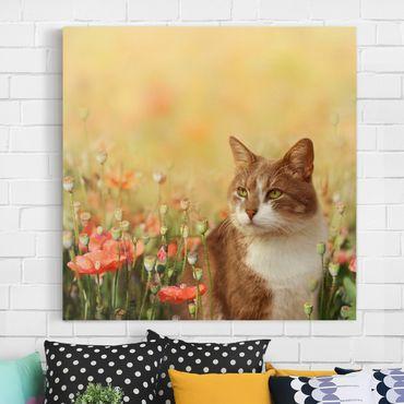 Stampa su tela - Cat In A Field Of Poppies - Quadrato 1:1