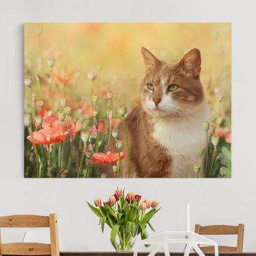 Stampa su tela - Cat In A Field Of Poppies - Orizzontale 4:3