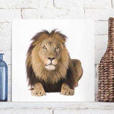 Stampa su tela - Lion King II - Quadrato 1:1