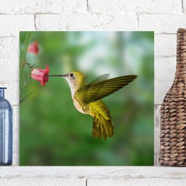 Stampa su tela - Hummingbird And Flower - Quadrato 1:1