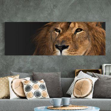 Stampa su tela - Lions Look - Panoramico