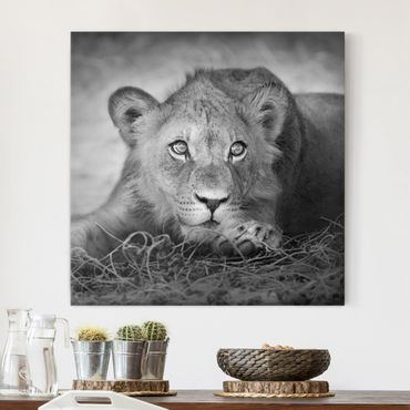 Stampa su tela - Lurking Lionbaby - Quadrato 1:1