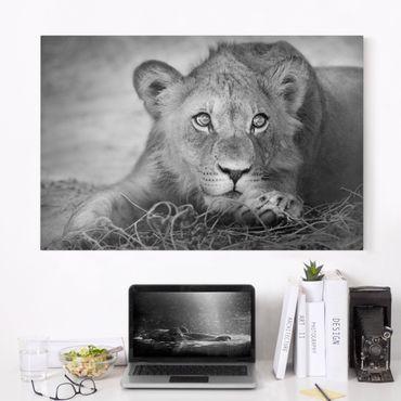 Stampa su tela - Lurking Lionbaby - Orizzontale 3:2
