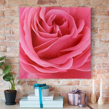 Stampa su tela - Lustful Pink Rose - Quadrato 1:1