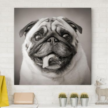 Stampa su tela - Funny Pug - Quadrato 1:1