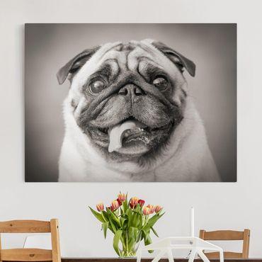 Stampa su tela - Funny Pug - Orizzontale 4:3