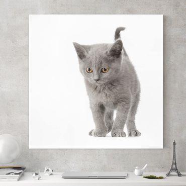 Stampa su tela - Mini Kitty - Quadrato 1:1