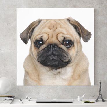 Stampa su tela - Portrait Of Pug - Quadrato 1:1