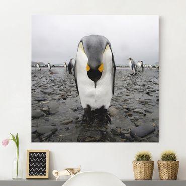 Stampa su tela - Penguins - Quadrato 1:1