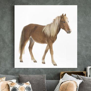 Stampa su tela - Pony - Quadrato 1:1