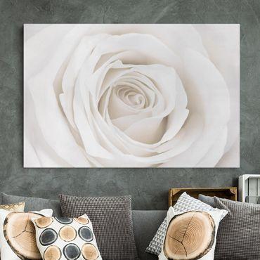 Stampa su tela - Pretty White Rose - Orizzontale 3:2
