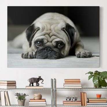 Stampa su tela - Pug Loves You - Orizzontale 3:2