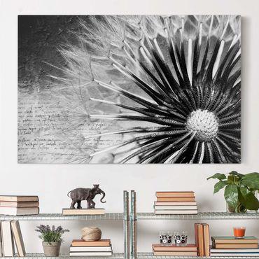Stampa su tela - Dandelion Black & White - Orizzontale 3:2