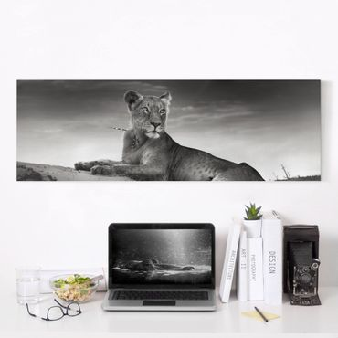 Stampa su tela - Resting Lion - Panoramico