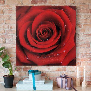 Stampa su tela - Red Rose With Water Drops - Quadrato 1:1