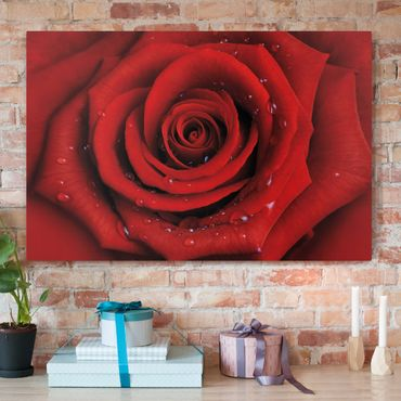 Stampa su tela - Red rose with water drops - Orizzontale 3:2