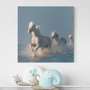 Stampa su tela - Cavalli bianchi - Quadrato 1:1