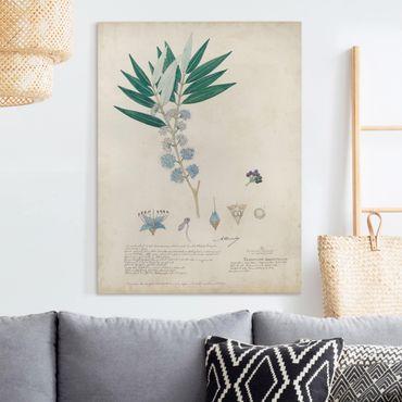 Stampa su tela - Melastomataceae - Angustifolium - Verticale 3:4