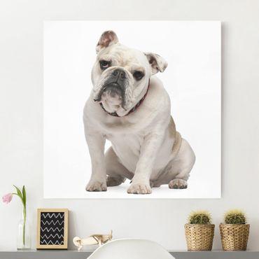 Stampa su tela - Skeptical Bulldog - Quadrato 1:1