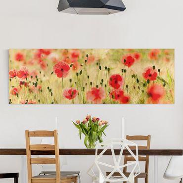 Stampa su tela - Summer Poppies - Panoramico